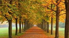 놓치면 안 되는 가을 축제를 알려주세요.